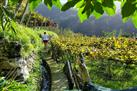 Madeira Wine Tour-Vineyards and Cellars