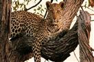 One Night Leopard Tour of Kruger National Park